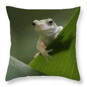 Juvenile Grey Treefrog Throw Pillow