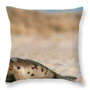 Juvenile Harp Seal Basking In The Sun Throw Pillow