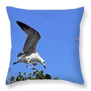 Juvenile Herring Gull Throw Pillow