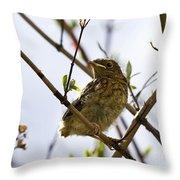 Juvenile Robin Throw Pillow by Jane Rix