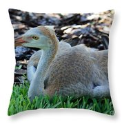 Juvenile Sandhill Crane At Rest Throw Pillow