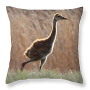 Juvenile Sandhill In The Marsh Throw Pillow