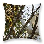 Juvenile Snowy Egret Throw Pillow