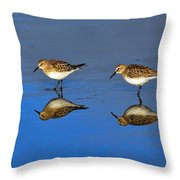 Juvenile White-rumped Sandpipers Throw Pillow