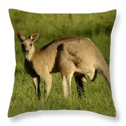 Kangaroo Male Throw Pillow by Bob Christopher