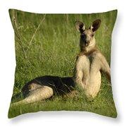 Kangaroo Playing It Cool Throw Pillow