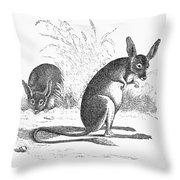 Kangaroo Rat Throw Pillow