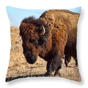 Kansas Buffalo Throw Pillow