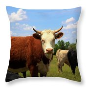 Kansas Country Cow's With Blue Sky And Grass Throw Pillow