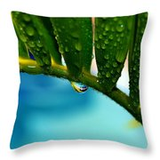 Karoo Cycad E Lehmannii Throw Pillow