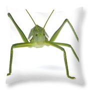 Katydid Silaka Nature Reserve South Throw Pillow