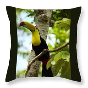 Keel-billed Toucan Throw Pillow