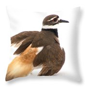 Killdeer - Show Off In The Spring Snow  Throw Pillow