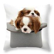 King Charles Spaniel Puppies Throw Pillow