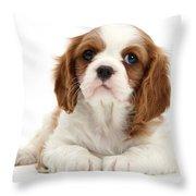 King Charles Spaniel Puppy Throw Pillow