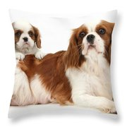 King Charles Spaniels Throw Pillow