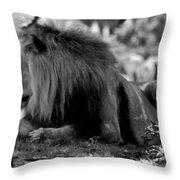 King Of Cats Throw Pillow
