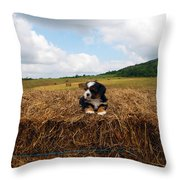 King Of The Hay Throw Pillow