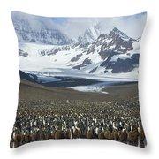 King Penguin Aptenodytes Patagonicus Throw Pillow