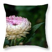 King Rose Strawflower Throw Pillow