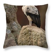 King Vulture Sarcoramphus Papa Perched Throw Pillow by Pete Oxford
