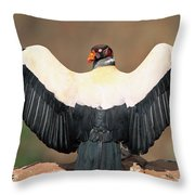 King Vulture Sarcoramphus Papa Sunning Throw Pillow by Pete Oxford