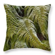Kiokio Blechnum Novae-zelandiae Covered Throw Pillow
