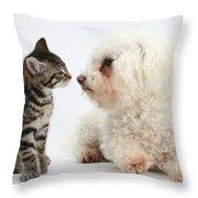 Kitten & Pup Confrontation Throw Pillow