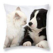 Kitten And Border Collie Pup Throw Pillow