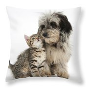 Kitten And Daxie-doodle Puppy Throw Pillow