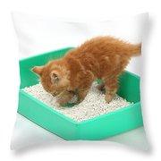 Kitten And Litter Tray Throw Pillow