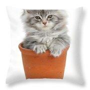 Kitten In Pot Throw Pillow
