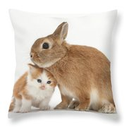 Kitten With Sandy Netherland Throw Pillow