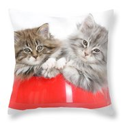 Kittens In A Food Bowl Throw Pillow