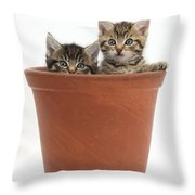 Kittens In Flowerpot Throw Pillow