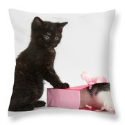 Kittens Playing With Birthday Gift Bag Throw Pillow