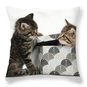Kittens Playing With Box Throw Pillow