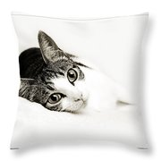 Kitty Cat Greeting Card I Miss You Throw Pillow
