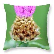 Knapweed Flower Throw Pillow