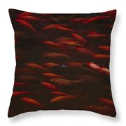 Koi Fish In China Throw Pillow
