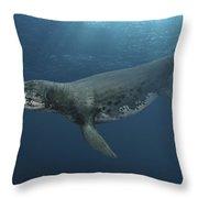 Kronosaurus Queenslandicus Swimming Throw Pillow