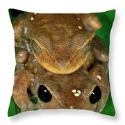 Lacelid Frog Nyctimystes Dayi Pair Throw Pillow
