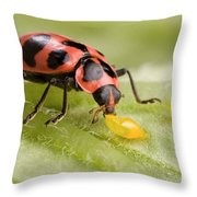 Lady Beetle Eats Potato Beetle Eggs Throw Pillow