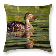 Lady Duck 1 Throw Pillow
