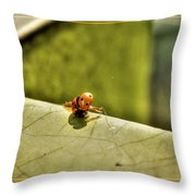 Lady What    Failed Luck  Throw Pillow
