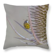 Ladybug Croosing The Prickles  Throw Pillow