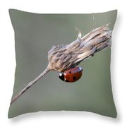 Ladybug On Dried Thistle Throw Pillow