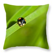 Ladybug With Black-brown And Red Color Throw Pillow