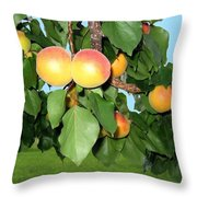 Lake Country Apricots Throw Pillow