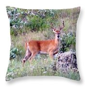 Lake Country Buck Throw Pillow
